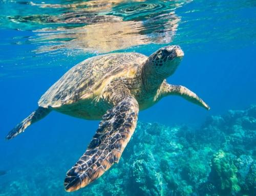 Con nuestro mar a cuestas (Fundación AquaMaris)