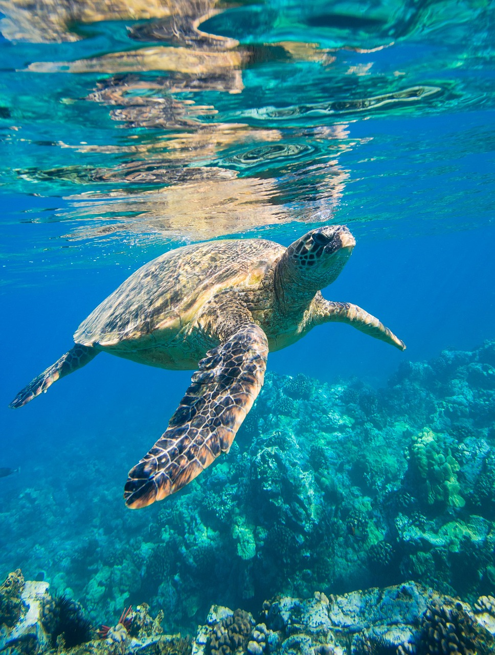 Tortuga marina nada en las profundidades del mar